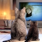 效果缩略图(猫妈妈陪孩子看电视)